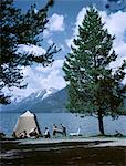 1950s FAMILY JACKSON LAKE GRAND TETON NATIONAL PARK WYOMING LAKE TENT