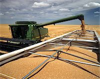 1990s WHEAT HARVEST GRAIN POURING INTO TRUCK FROM COMBINE NEAR HAXTUN PHILLIPS COUNTY, COLORADO Stock Photo - Premium Rights-Managednull, Code: 846-05646882