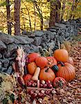 PUMPKINS SQUASH APPLES CORN BY STONE FENCE AUTUMN HARVEST PLENTY