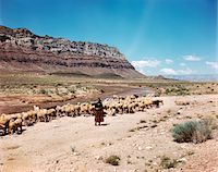 1960s NAVAJO WOMAN HERDING SHEEP IN SOUTHWESTERN LANDSCAPE Stock Photo - Premium Rights-Managednull, Code: 846-05647067