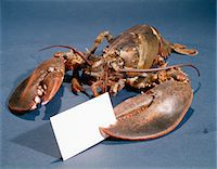 LIVE LOBSTER HOLDING A CARD IN CLAW Stock Photo - Premium Rights-Managednull, Code: 846-05647489