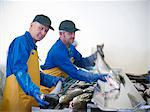 Fishmongers with catch of the day Stock Photo - Premium Royalty-Free, Artist: CulturaRM, Code: 649-05649445