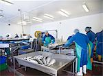 Workers in fish processing plant Stock Photo - Premium Royalty-Freenull, Code: 649-05649446