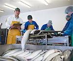 Workers in fish processing plant Stock Photo - Premium Royalty-Free, Artist: Blend Images, Code: 649-05649449