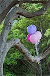 Party marker balloons. Kirstenbosch Botanical Gardens; Cape Town; South Africa Stock Photo - Premium Royalty-Freenull, Code: 682-05650179