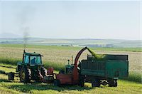 Tractor and machinery cutting wheat harvest, Bredasdorp, western Cape, South Africa Stock Photo - Premium Royalty-Freenull, Code: 682-05650544