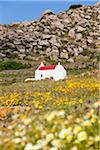 Chapel in Field of Flowers, Mykonos, Cyclades Islands, Greece Stock Photo - Premium Rights-Managed, Artist: F. Lukasseck, Code: 700-05653135