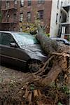 Fallen Tree on Car Stock Photo - Premium Rights-Managed, Artist: TSUYOI, Code: 700-05653257