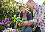 Senior couple planting in garden Stock Photo - Premium Royalty-Freenull, Code: 635-05656179