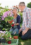 Smiling senior couple planting flowers in sunny garden Stock Photo - Premium Royalty-Freenull, Code: 635-05656252