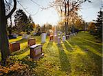 Bright Sun at Sunset over Cemetery Stock Photo - Premium Rights-Managed, Artist: Matthew Plexman, Code: 700-05656527