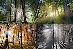 Views of four seasons of forest Stock Photo - Premium Royalty-Free, Artist: Westend61, Code: 649-05657667