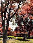 Idilic image of park bench and trees Stock Photo - Royalty-Free, Artist: carloscastilla                , Code: 400-05663851