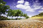 Suggestive point of view of landscape with road and trees Stock Photo - Royalty-Free, Artist: carloscastilla                , Code: 400-05663852