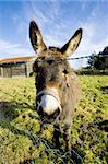 donkey, Champagne, France Stock Photo - Royalty-Free, Artist: phbcz                         , Code: 400-05668525