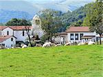 Cows in a rural village in the Basque Country, France Stock Photo - Royalty-Free, Artist: Dutourdumonde                 , Code: 400-05669319