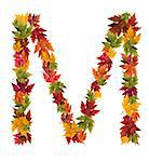 Alphabet and numbers made from autumn maple tree leaves.