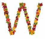 Alphabet and numbers made from autumn maple tree leaves. Stock Photo - Royalty-Free, Artist: DJM_Photo                     , Code: 400-05669526