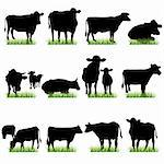 cows silhouettes set Stock Photo - Royalty-Free, Artist: kaludov                       , Code: 400-05671346