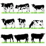 Cows and Bulls Silhouettes set Stock Photo - Royalty-Free, Artist: kaludov                       , Code: 400-05672881