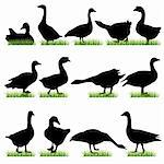 Goose silhouettes set Stock Photo - Royalty-Free, Artist: kaludov                       , Code: 400-05672887
