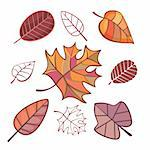 set of autumn leaves isolated on white Stock Photo - Royalty-Free, Artist: SelenaMay                     , Code: 400-05673522