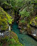 Beautiful turquoise mountain stream among mossy green boulders in Glacier National Park, Montana. Stock Photo - Royalty-Free, Artist: markskalny                    , Code: 400-05674366