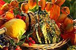 Still life of pumpkins for Thanksgiving Stock Photo - Royalty-Free, Artist: Brebca                        , Code: 400-05674565