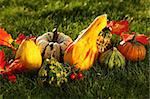 Still life of pumpkins for Thanksgiving Stock Photo - Royalty-Free, Artist: Brebca                        , Code: 400-05674567