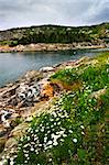 Scenic coastal view of rocky Atlantic shore in Newfoundland, Canada Stock Photo - Royalty-Free, Artist: Elenathewise                  , Code: 400-05677090