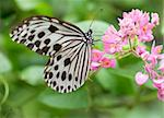 butterfly with natural green background Stock Photo - Royalty-Free, Artist: yuliang11                     , Code: 400-05679120