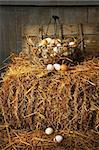 Basket of freshly laid  eggs lying on straw in the barn Stock Photo - Royalty-Free, Artist: Sandralise                    , Code: 400-05683269