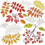 Set abstract design autumn floral element on white (vector) Stock Photo - Royalty-Free, Artist: OlgaDrozd                     , Code: 400-05683519