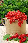 Ceramic cup full of fresh red currant berries