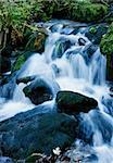A mountain river with stream falling into it Stock Photo - Royalty-Free, Artist: xtrekx                        , Code: 400-05689344