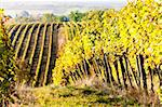 vineyards in autumn, Unterretzbach, Lower Austria, Austria Stock Photo - Royalty-Free, Artist: phbcz                         , Code: 400-05690705