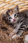 Adorable Cute Newborn Baby Kitten Stock Photo - Royalty-Free, Artist: tobkatina                     , Code: 400-05693358
