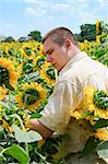 Farmer standing in a sunflower field Stock Photo - Royalty-Free, Artist: dvarg                         , Code: 400-05693395