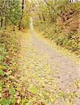 Road from the sett in the autumnal forest Stock Photo - Royalty-Free, Artist: Mallivan                      , Code: 400-05693738