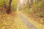 Road from the sett in the autumnal park Stock Photo - Royalty-Free, Artist: Mallivan                      , Code: 400-05693741