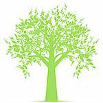 Beautiful art tree isolated on white background Stock Photo - Royalty-Free, Artist: inbj                          , Code: 400-05693963