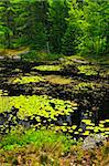 Lily pads and water lilies on lake surface in Northern Ontario wilderness Stock Photo - Royalty-Free, Artist: Elenathewise                  , Code: 400-05695757