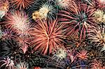 Multicolored fireworks fill the horizontal frame Stock Photo - Royalty-Free, Artist: sgoodwin4813                  , Code: 400-05699067