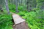 Hiking trail winds through the Two Medicine Area forest of Glacier National Park - USA. Stock Photo - Royalty-Free, Artist: Wirepec                       , Code: 400-05705143