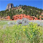 Devils Tower National Monument rises over a field of flowers in Wyoming. Stock Photo - Royalty-Free, Artist: Wirepec                       , Code: 400-05705157