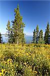 Wildflowers grow along the shoreline of Jackson Lake in Grand Teton National Park - USA. Stock Photo - Royalty-Free, Artist: Wirepec                       , Code: 400-05705161