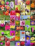 Collage of flowers in different shapes, colors and designs. Stock Photo - Royalty-Free, Artist: smarnad                       , Code: 400-05705455