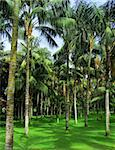 Tropical palms forest growing on green grass Stock Photo - Royalty-Free, Artist: Anterovium                    , Code: 400-05705887