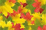 Autumn colorful leaves background Stock Photo - Royalty-Free, Artist: tetkoren                      , Code: 400-05708106