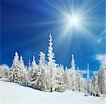 Winter snow covered fir trees on mountainside on blue sky with sun shine background Stock Photo - Royalty-Free, Artist: Yuriy                         , Code: 400-05713500